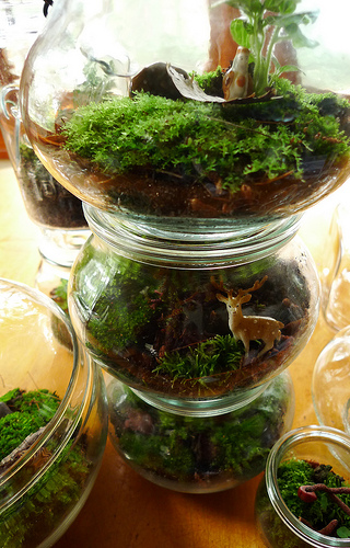 terrarium tower